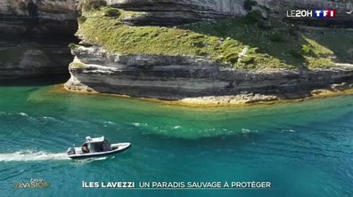 Corse : les îles Lavezzi, un paradis à protéger