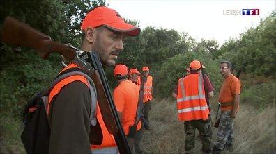 Coup d'envoi de la chasse aux sangliers en Corse