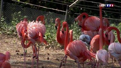 Covid-19 : que deviennent les animaux dans les parcs animaliers ?