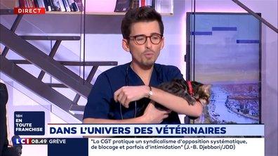 Dans l'univers des vétérinaires