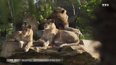 Dans les coulisses du zoo de Beauval