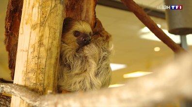 Dans les coulisses du zoo de l'Ardes en plein hiver