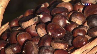 De la Terre à L'assiette : la farine de châtaigne, un produit ancré dans la culture corse