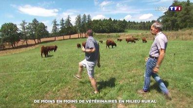 De moins en moins de vétérinaires en milieu rural