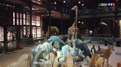 Découverte : dans les coulisses du Muséum d'Histoire naturelle de Paris