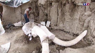 Découverte : des ossements de mammouths retrouvés au Mexique