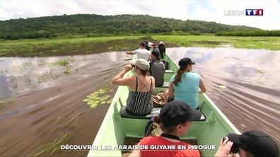 Découvrir les marais de Guyane en pirogue