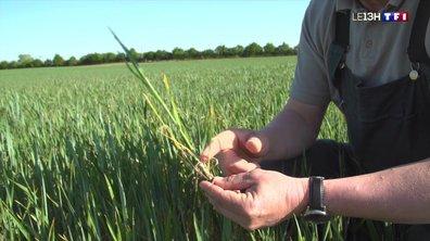 Déjà des alertes sécheresse : agriculteurs et jardiniers s'inquiètent