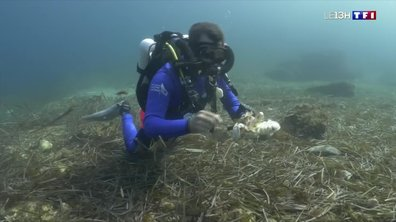 Des belles initiatives pour lutter contre la pollution du littoral méditerranéen