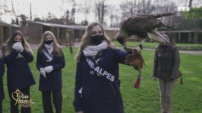 Des Miss et des faucons (en vidéo) - Miss France 2021