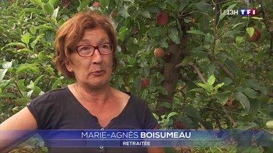 Des seniors récoltent les pommes à Secondigny