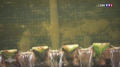 Des traces de virus retrouvées dans l'eau non potable de Paris