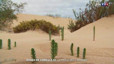 Dunes de Corralejo : la perle des Canaries
