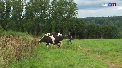 """""""En vacances avec vous"""" : visite à la ferme dans le Calvados"""