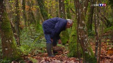 Encore beaucoup de champignons dans les forêts