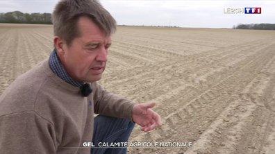 Épisode de gel : une calamité agricole nationale