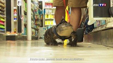 États-Unis : jamais sans mon alligator !