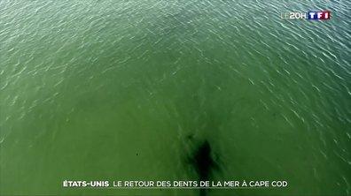 États-Unis : les requins sont de retour à Cape Cod