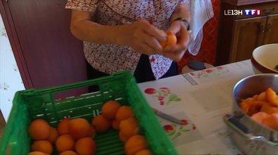 Étoile-sur-Rhône : quand Monique Verd sublime les abricots