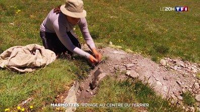Étude scientifique : dans l'intimité des Marmottes