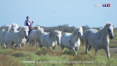 Évasion : sur les chemins de la Camargue sauvage
