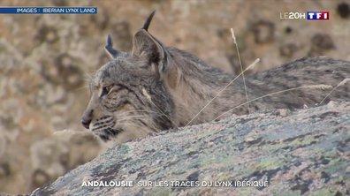 Évasion : sur les traces du lynx ibérique en Andalousie