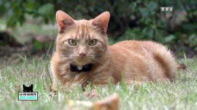La vie secrète des chats : découvrez Corinne, fan de ses deux matous Fanjo et Faya ! (VIDEO)