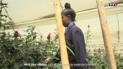 Fête des mères : les roses ont un parfum d'Afrique