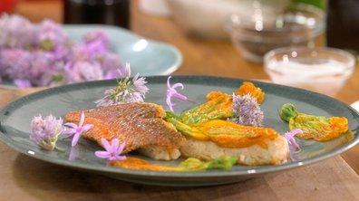 Filets de rouget barbet aux fleurs de courgette