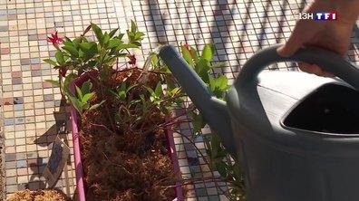 Fortes chaleurs : les jardiniers redoublent d'attention