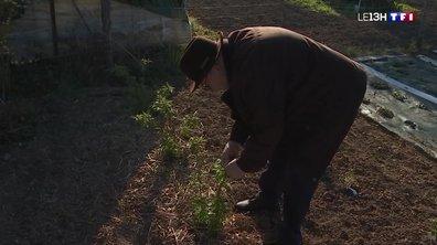 Froid : les conseils pour protéger son jardin