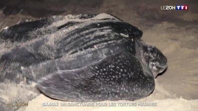 Gabon : la ponte des tortues marines géantes sous haute protection