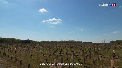 Gel : qui va payer les dégâts dans les vignes et les vergers ?