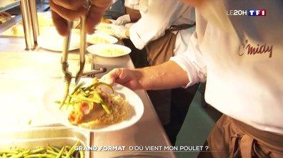 Grand format : d'où viennent les poulets dans nos assiettes ?