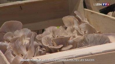 Grand format : les Français retrouvent le goût des champignons
