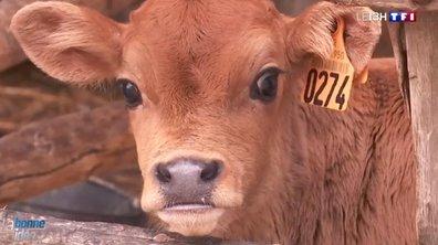 Les habitants des Pays de la Loire sauvent une ferme
