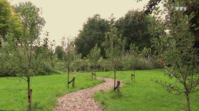 Habitons demain - Mini-forêt