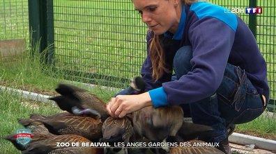 Héros de l'été : les soigneurs des animaux du zoo de Beauval