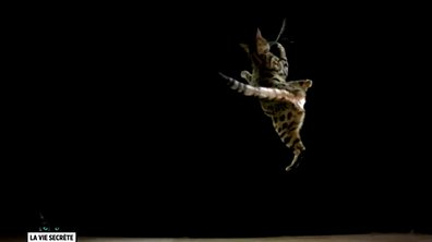 Les chats adorent faire tomber les objets et autres idées reçues sur les chats (VIDEO)