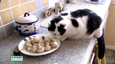 Quatre idées reçues complètement fausses sur les chats (VIDEO)