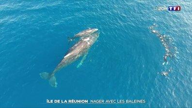 Île de la Réunion : plonger avec les baleines à bosse