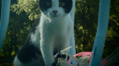 Aidez Sylvie à retrouver son chat, Whiskas