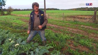 Incendie à Rouen : les agriculteurs ne peuvent toujours pas commercialiser leurs produits