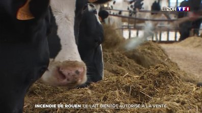 Incendie de Rouen : le lait bientôt autorisé à la vente