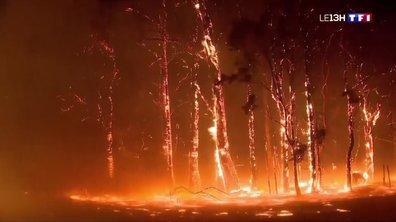 Incendies en Australie : les pompiers sont à bout