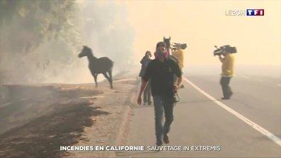 Incendies en Californie : des chevaux sauvés in extremis