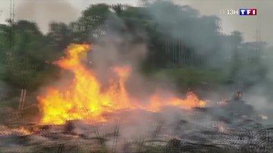 Indonésie : 9 000 pompiers et soldats mobilisés pour lutter contre les feux de forêt