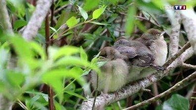 Jardins magnifiques : à la découverte du Jardin aux Oiseaux de Couzeix