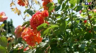 Jardins merveilleux : la roseraie Paul Croix à Bourg-Argental