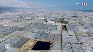 L'Andalousie : l'usine à légumes de l'Europe